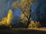 The Evening Sun Shines on Leidig Meadow - Marc Moritsch