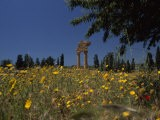 Ancient Roman Columned Ruins Amid Wildflowers in Sicily, Italy - Marcia Kebbon