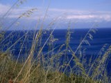 View of the Sea Through Grasses Atop a Hill - Marcia Kebbon