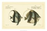 Antique Fish I - Marcus Elieser Bloch