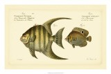 Antique Fish VI - Marcus Elieser Bloch