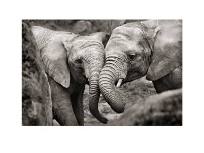 Elphants Amoureux Marina Cano Posters Affiches DArt