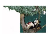 Panda And Child - Nancy Tillman