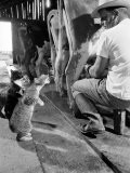 Cats Blackie and Brownie Catching Squirts of Milk During Milking at Arch Badertscher's Dairy Farm - Nat Farbman