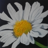 Painting - marguerite 2