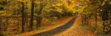 Autumn Road, Emery Park, New York State, USA - Panoramic Images