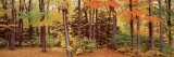 Autumn Trees in a Forest, Chestnut Ridge Park, New York, USA - Panoramic Images