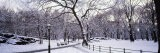 Bare Trees During Winter in Central Park, Manhattan, New York City, New York, USA - Panoramic Images