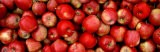 Close-up of Red Apples - Panoramic Images