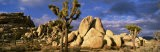 Joshua Tree National Park, California, USA - Panoramic Images