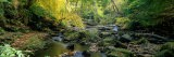 Stream Flowing Through Forest, Eller Beck, England, United Kingdom - Panoramic Images