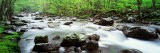 Water Flowing over Rocks, Little Pigeon River, Great Smoky Mountains National Park, Tennessee, USA - Panoramic Images