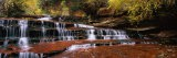 Waterfall in a Forest, North Creek, Zion National Park, Utah, USA - Panoramic Images