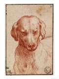 Head of a Dog - Parmigianino