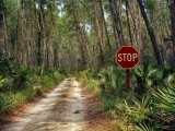 Central Florida, Stop Sign, Ocala Forest Road - Pat Canova