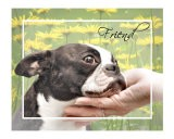Boston Terrier Friend - Patti Meador