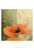 Orange Poppies III - Patty Q.