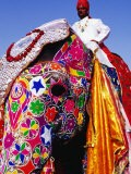 Entrant in Best Dressed Elephant Competition at Annual Elephant Festival, Jaipur, India - Paul Beinssen