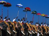 Men Riding Decorated Elephants at Annual Pooram Festival, Thrissur, India - Paul Beinssen