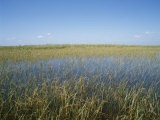 The Everglades, Everglades National Park, Florida, United States of America (Usa), North America - Philip Craven