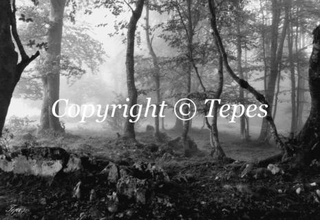 photo bois noir et blanc brouillard paysage les bois perdus. Black Bedroom Furniture Sets. Home Design Ideas