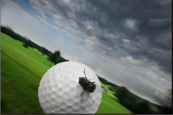 PHOTO golf mouche vitesse vol Sport  - Accroche-toi !