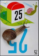 photo nature morte jeu escargot vitesse borne : 25 !