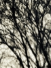 Photo - ombres d'arbres