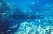 photo paysages bleu ocean poissons fond marin : Abysse