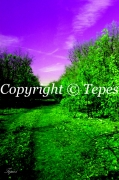 photo paysages chemin nature couleur violet : Le chemin sans fin