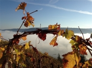 photo paysages saintjoseph ardeche : Treille de Saint Joseph en automne