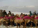 Afghan Men Look at Sheep with Their Backs Painted in Red, Kabul, Afghanistan, December 28, 2006 - Rafiq Maqbool