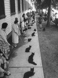 """Owners with Their Black Cats, Waiting in Line For Audition in Movie """"Tales of Terror"""" - Ralph Crane"""