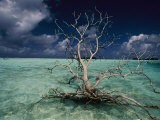 A Tree Floats in the Crystal-Clear Waters of Palmyra Atoll - Randy Olson