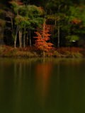 Reflections of Trees in a Lake in the Fall, Pocono Mountains, Pennsylvania - Raul Touzon
