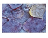 Leaves Frozen In Ice - Ray Vaughn