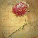 Little Strawflower - Sally Wetherby