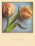 Parrot Tulips II - Sally Wetherby