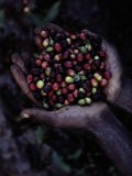 Coffee Beans & Trees - Sam Abell