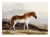 """The Quakah, Aquatint from """"African Scenery and Animals"""" - Samuel Daniell"""