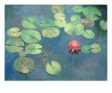 Lily Pads with Pink Flower - Sarah Parks