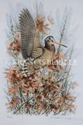 tableau animaux chasse animaux bois becasses : Scolopax