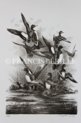 tableau animaux chasse oiseaux canards : Siffleurs