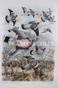 tableau animaux chasse oiseaux palombes gibier : Palombes