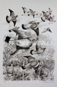 tableau animaux chasse oiseaux palombes : Palombes