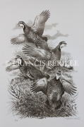 tableau animaux chasse oiseaux perdrix gibier : Perdrix Rouges