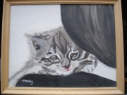 tableau animaux chat animal tigre domestique : Chaton