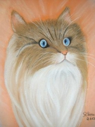 tableau animaux chat cat gatto katze : chat pastel