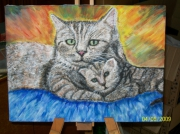 tableau animaux chat chaton europeen : tendres moments