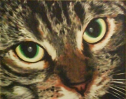 tableau animaux chat regard tendresse yeux : Dédé le chat